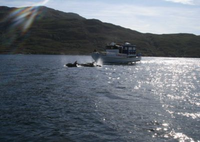 Dolphins off Castaway Cove